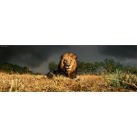 Пазл «Лев» (29518)