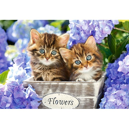 Пазл Два котенка (C-151561)
