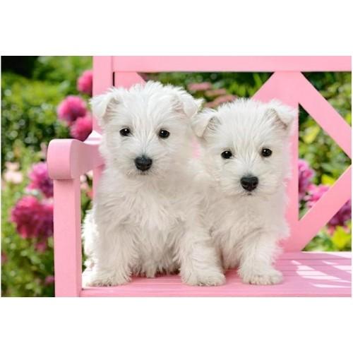 Пазл Два белых щенка (C-151721)