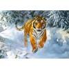 Пазл «Амурский тигр» (B-52400)