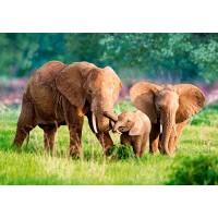 Пазл «Семья слонов» (B-52196)