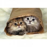 Пазл «Персидские котята» (P1016)