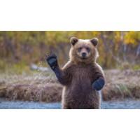 Пазл недели (13.12.2017) для онлайн сборки. День медведя