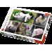 Пазл Кошки-коллаж (26145) 1500 элементов